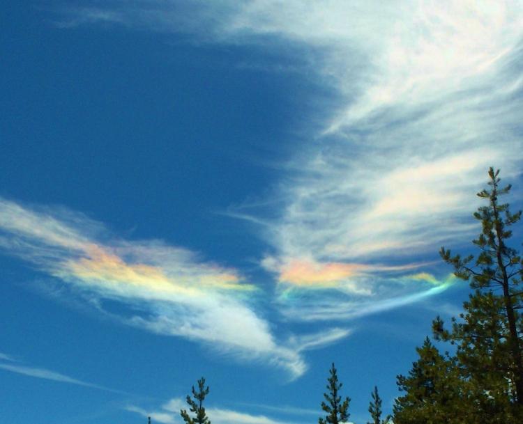 rainbow wings (2)